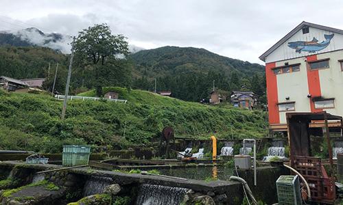 八ツ峰養魚(新潟・南魚沼市)